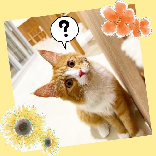 🐱新入り子猫ちゃん4頭仲間入り🐱