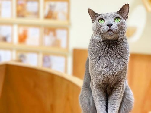 🐈⬛猫ちゃんのお引越しについて🐈⬛